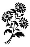 Chamomile flowers, silhouettes. Bouquet of chamomile flowers, black silhouettes on white background. Vector illustration Stock Photos