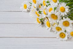 Chamomile flowers on a white wooden table.  Stock Image