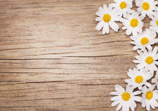 Chamomile flowers on wooden background Stock Photo