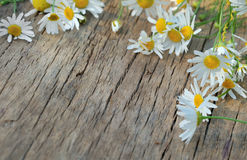 Chamomile flowers on a wooden background Royalty Free Stock Photos
