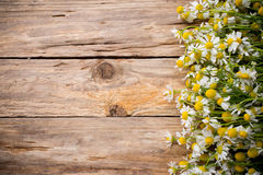 Chamomile. Chamomile flowers on a wooden background. Studio photography stock photos