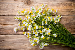 Chamomile. Chamomile flowers on a wooden background. Studio photography stock photo