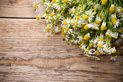 Chamomile. Royalty Free Stock Image