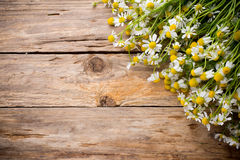 Chamomile. Chamomile flowers on a wooden background. Studio photography royalty free stock images