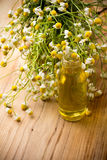 Chamomile. Stock Photography