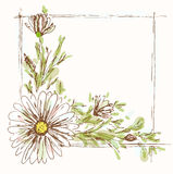 Chamomile frame. Flower background. Chamomile frame. Hand draw invitation card Stock Images