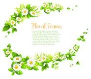 Chamomile  frame Stock Image