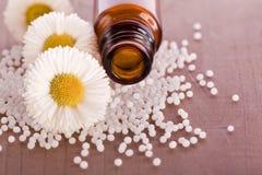 Chamomile globule alternative medicine. Chamomile homeopathic globule alternative medicine Stock Photos
