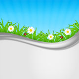 Chamomile with grass Royalty Free Stock Photos