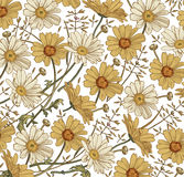 Chamomile Grass Wildflowers vector. Drawing, engraving. Beautiful vintage background blooming white yellow realistic flowers. Stock Photography