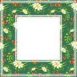 Chamomile green border Royalty Free Stock Image