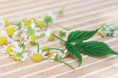 Chamomile and green leaf on a bamboo table Stock Image