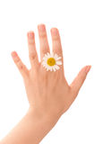 Chamomile on hand Royalty Free Stock Photo
