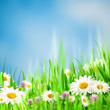 Chamomile harmony. Abstract natural backgrounds for your design Stock Photography