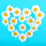 Chamomile heart background Royalty Free Stock Photography