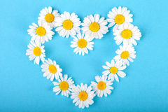 Chamomile heart on blue background Stock Photos