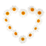 Chamomile heart Stock Photography
