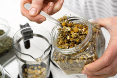 Chamomile herbal chamomile tea Royalty Free Stock Image