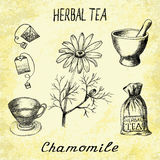 Chamomile herbal tea. Set of  elements on the basis hand pencil drawings. Stock Images