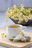 Chamomile Herbal Tea Stock Photography
