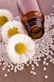 Chamomile homeopathic globule. Alternative medicine Stock Photos