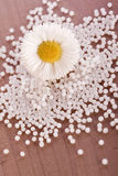 Chamomile homeopathic globule. Alternative medicine Stock Photography