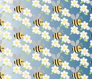 Chamomile and honey bee flowers Royalty Free Stock Photo