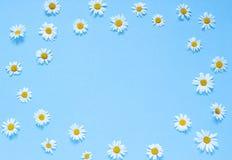 Chamomile kwiatów rama na błękitnym tle Odgórny widok kosmos kopii Fotografia Stock