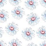 Chamomile kwiatu ręka rysuje bezszwowego wzór, wektorowy kwiecisty tło, kwiecisty hafciarski ornament Patroszeni pączki biali Obrazy Royalty Free