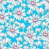 Chamomile kwiatu ręka rysuje bezszwowego wzór, wektorowy kwiecisty tło, kwiecisty hafciarski ornament Patroszeni pączki biali Zdjęcia Royalty Free