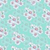 Chamomile kwiatu ręka rysuje bezszwowego wzór, wektorowy kwiecisty tło, kwiecisty hafciarski ornament Patroszonych pączków biały  Zdjęcia Stock