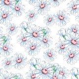 Chamomile kwiatu ręka rysuje bezszwowego wzór, wektorowy kwiecisty tło, kwiecisty hafciarski ornament Patroszonych pączków biały  Obrazy Stock