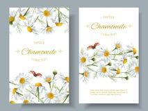 Chamomile kwiatu sztandary ilustracji