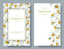 Chamomile kwiatu sztandary ilustracja wektor