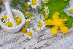 Chamomile, lady's mantle Royalty Free Stock Photos
