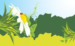 Chamomile and ladybird among grass. Banner Stock Images