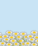 Chamomile landscape. Flowers and blue sky. White beautiful wild Royalty Free Stock Photo