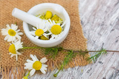 Chamomile, medicinal plant. With mortar stock image