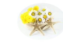 chamomile morza gwiazdy Zdjęcie Royalty Free