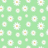 Chamomile na jasnozielonym pastelowym tło wzorze bezszwowy ve Zdjęcie Royalty Free