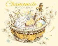 Chamomile natural cosmetic basket. Stock Image