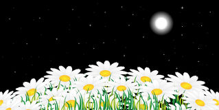 Chamomile and night Stock Images