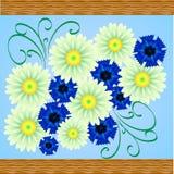 Chamomile och blåklint stock illustrationer