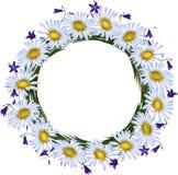 Chamomile och hand-bell. Blommaram Arkivbilder