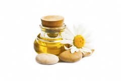 Chamomile oil spa and massage stones isolated. Chamomile oil for spa treatment with flower and massage stones isolated stock photography