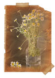 Chamomile.  Page with vintage effect Stock Photos