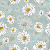 Chamomile pattern on blue background Stock Photos