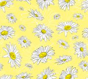 Chamomile pattern in graphics royalty free illustration