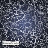 Chamomile pattern. Chamomile seamless pattern can be used for wallpaper, website background, textile printing Stock Photos