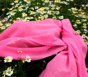 Chamomile and the pink cloth. Beautiful photo of chamomile close-up, blossoming daisy officinalis, white flowers, beauty of spring, spring garden, chamomile Royalty Free Stock Photography